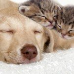 Pathogens on cats dog and pets