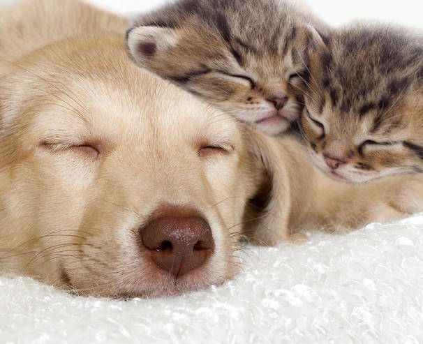 Pet Pathogens On Dogs and Cats